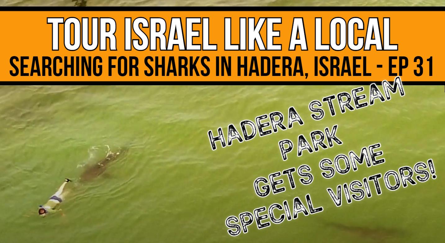 Sharks in Hadera, Israel